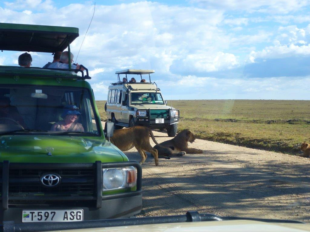 Lions on Family Thriller Safari in Kenya